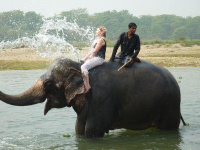 himalaya elephant